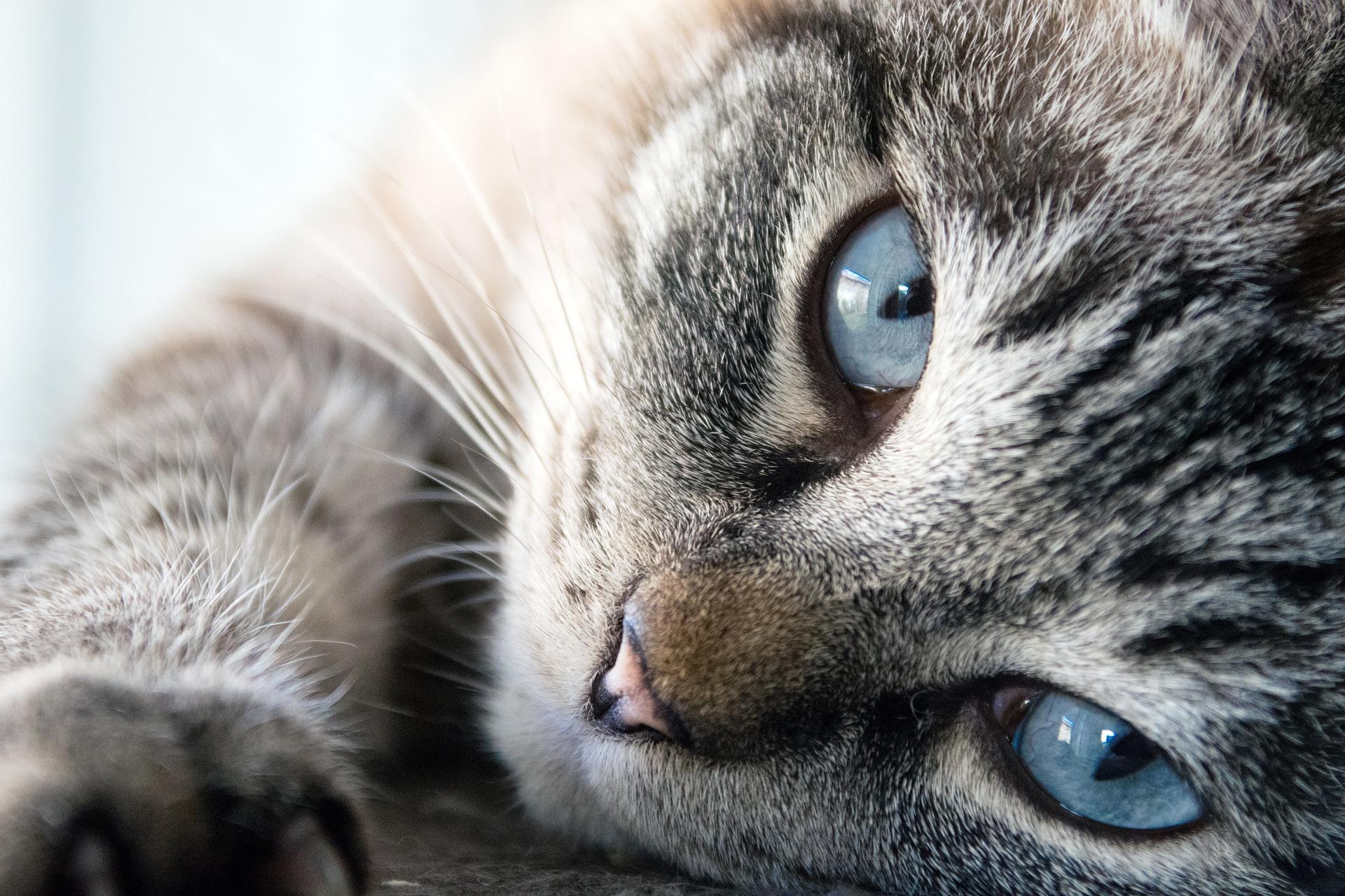 Jak karmić kota z alergią pokarmową?